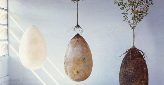 Capsules funéraires: devenez un arbre après votre mort!