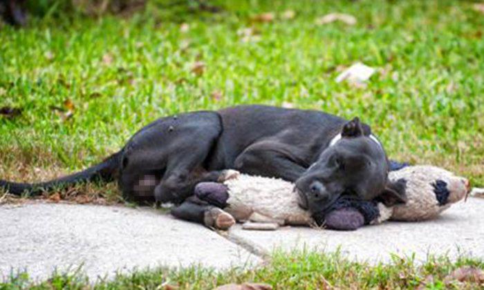 ne photo d'un chien sans-abri qui s'accroche à un ours en peluche devient virale, laissant les gens tristes et en colère
