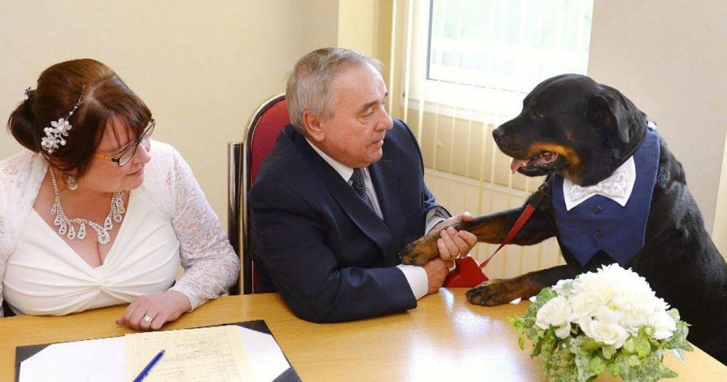 Un rottweiler a été le garçon d'honneur au mariage de son propriétaire