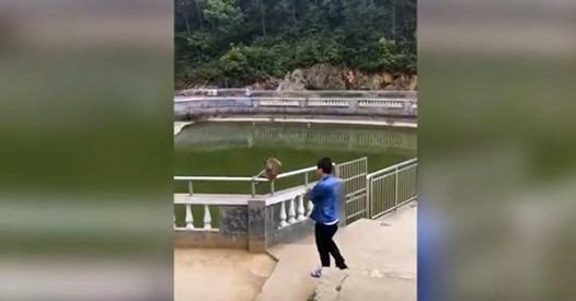 Il pousse un singe dans l'eau mais il va vite le regretter – L'animal se VENGE!