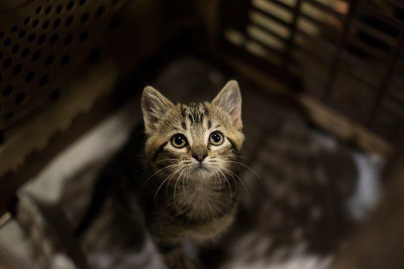 Aux yeux des chats, les humains sont comme leurs parents selon une étude