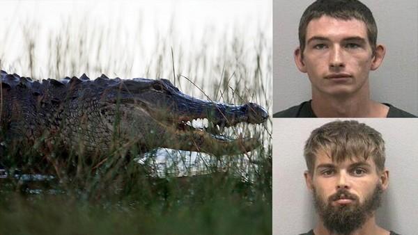 Pour s'amuser, ils forcent un alligator à boire de la bière et se font mordre