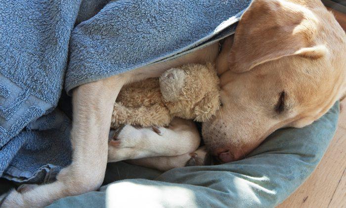 Une photo d'un chien sans-abri qui s'accroche à un ours en peluche devient virale, laissant les gens tristes et en colère