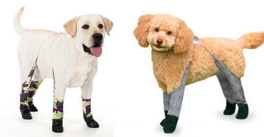 Ces leggings pour chien protégeront les pattes de votre toutou du froid cet hiver