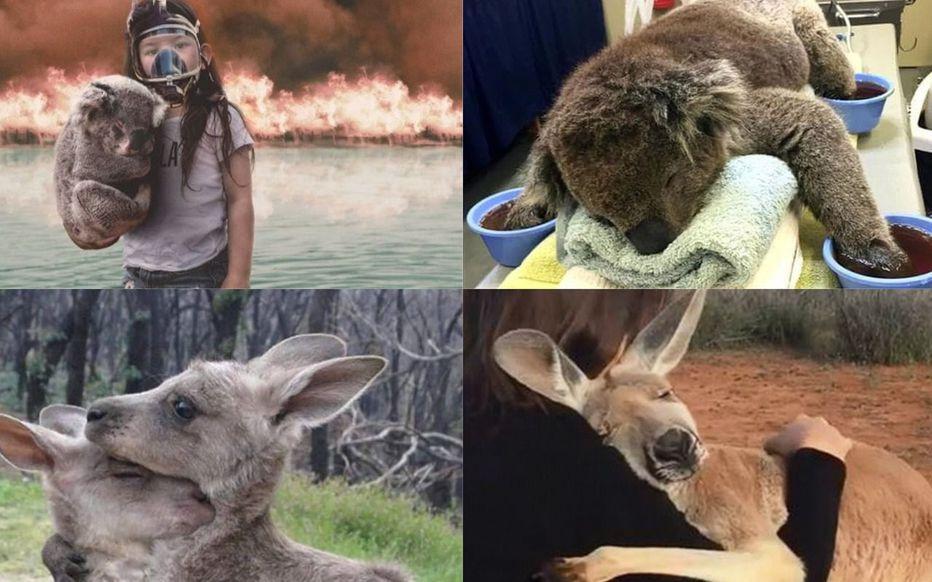 Incendies en Australie : ces fausses images qui circulent sur les réseaux sociaux