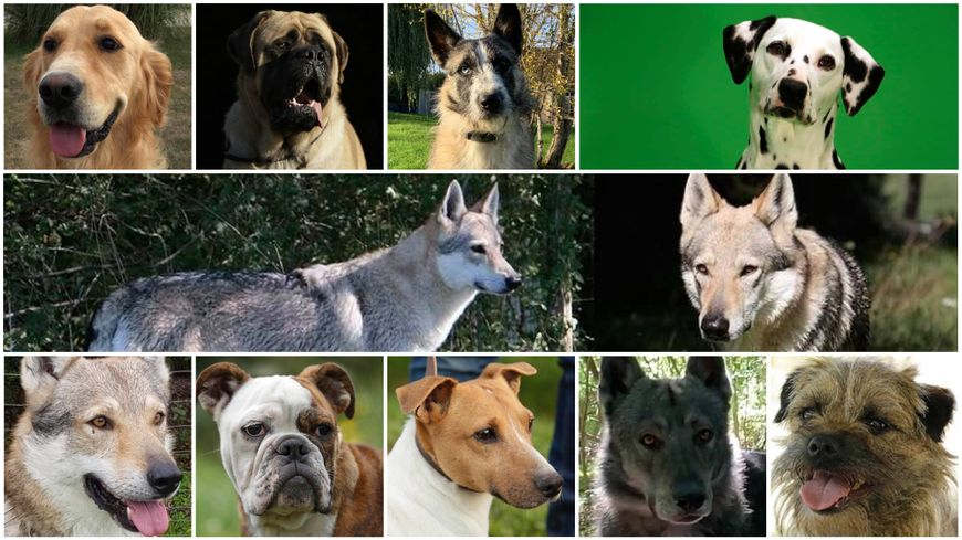 Loiret : Onze chiens dressés pour le cinéma périssent dans un incendie