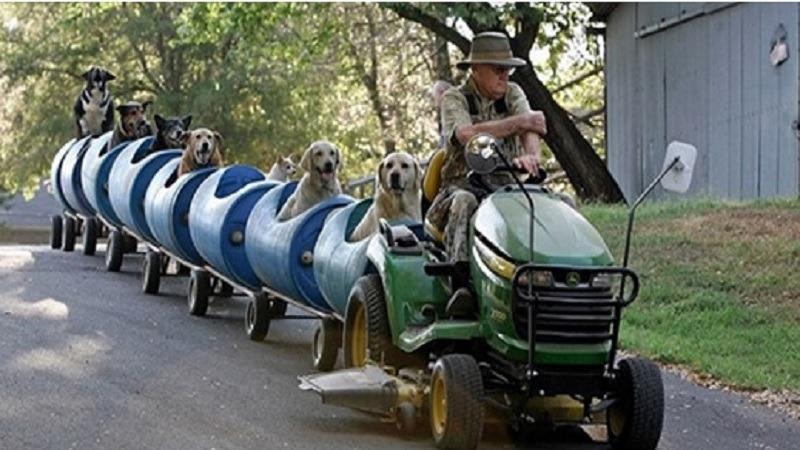 Ce papi a monté un train miniature pour emmener balader tous les chiens de la rue qu'il a préservés.