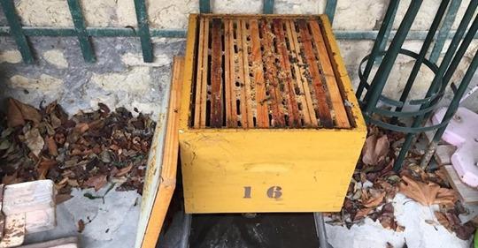 Victimes d'un acte de vandalisme avec des ruches renversées, 30 000 abeilles ont été décimées