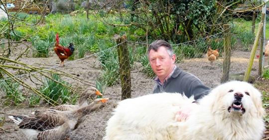 Gers: un agriculteur et son chien Patou au coeur d'un conflit de voisinage