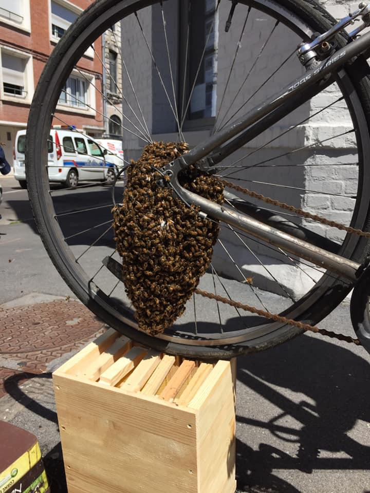 Arras : une opération de sauvetage délicate pour un essaim d'abeilles fugueuses