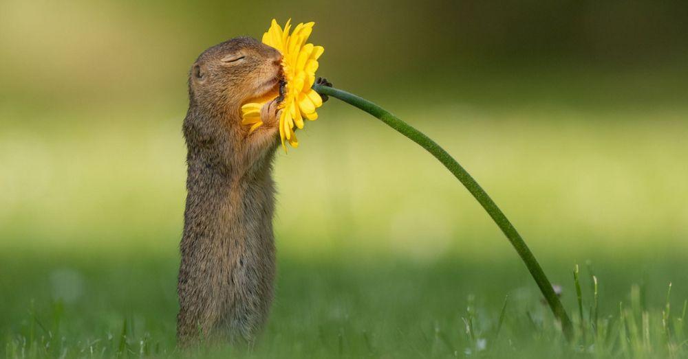 Une photo virale capture l'instant où cet écureuil s'arrête pour sentir une fleur