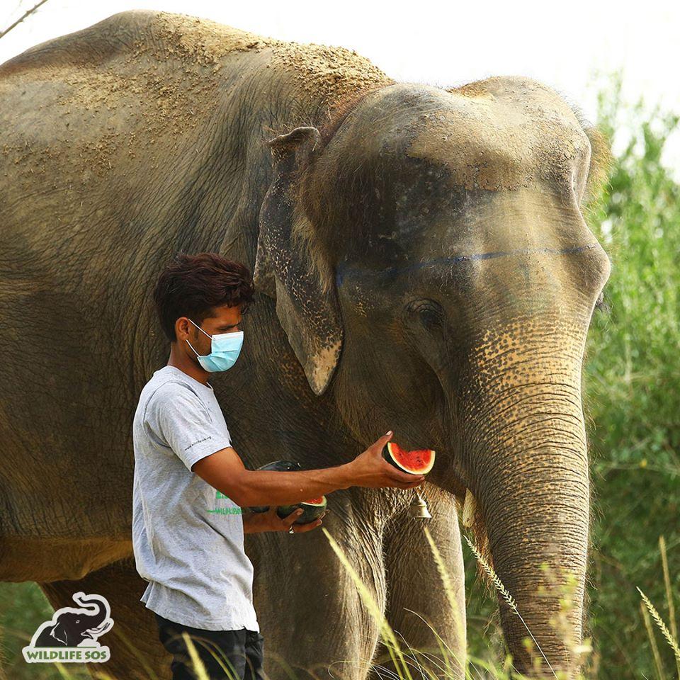 En Inde, une association crée un hôpital pour soigner les éléphants maltraités et malades