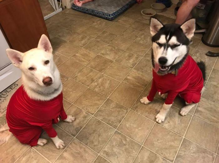 Amazon vend des grenouillères pour chiens qui protègent votre maison des poils et réduisent leur anxiété