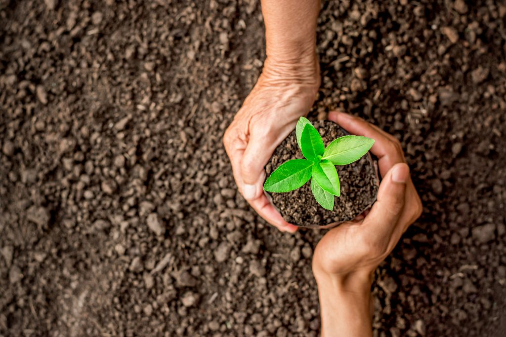 Les semences paysannes enfin autorisées à la vente après des années de combat