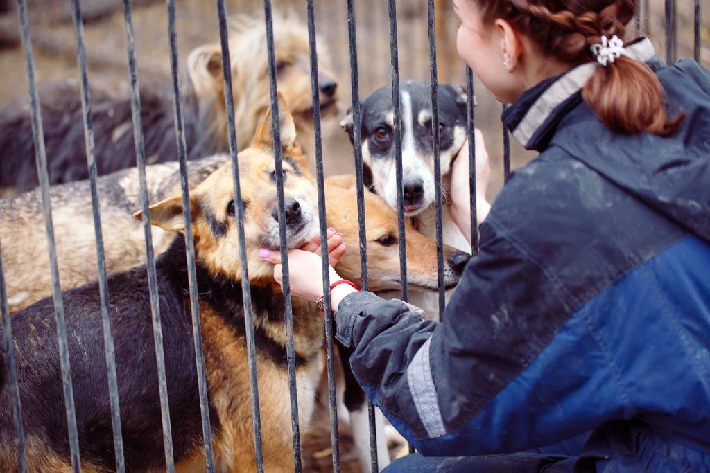 Charente-Maritime : un legs de 187.000 euros pour les Amis des Bêtes de Royan