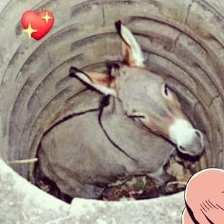 Un jour, l'âne d'un fermier est tombé dans un puits.