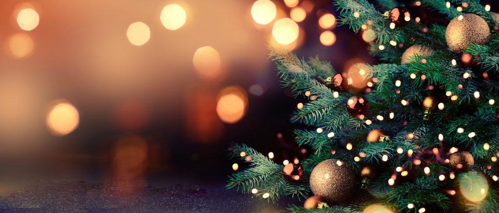 Le nouveau maire écologiste de Bordeaux veut supprimer le sapin de Noël qu'il accuse d'être « un arbre mort