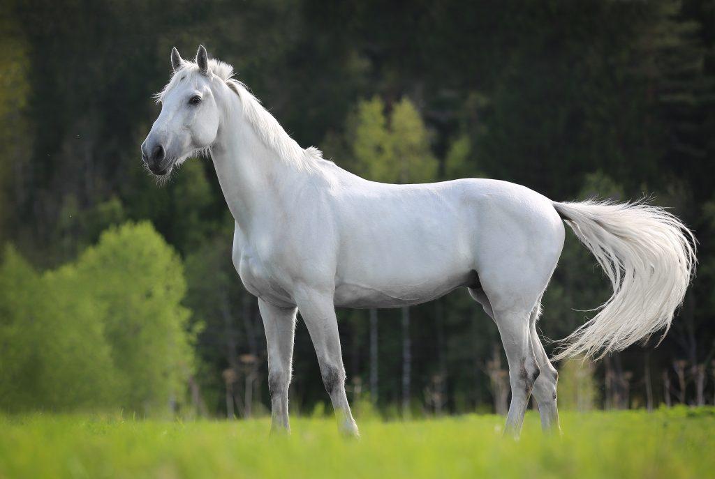 Mutilation de chevaux : deux cas préoccupants relevés dans le Val-d'Oise