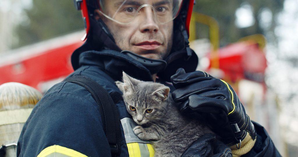 USA : un chaton sauvé d'une chute mortel dans un stade  américain !